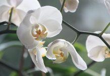 """""""Orquídeas da Colômbia"""" invadem Jardim Zoológico numa exposição rica em cores e aromas"""