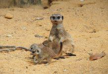 """Este Carnaval, visite o Jardim Zoológico e descubra as novas crias da savana africana e as suas """"máscaras"""""""