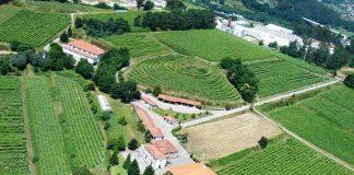 Região dos Vinhos Verdes aumenta em 70% as indemnizações do Seguro de Colheitas