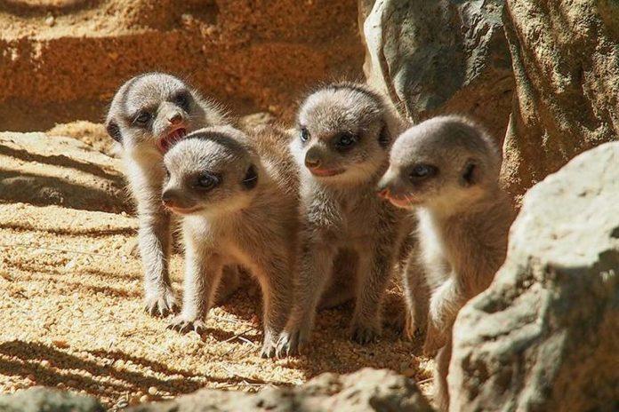 verão Jardim Zoológico