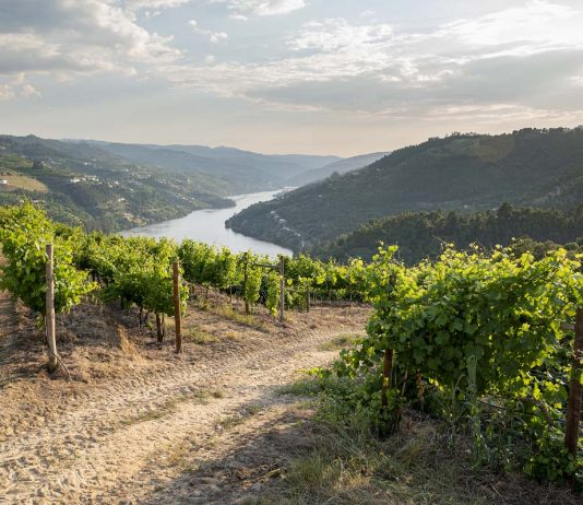 vinhos Cazas Novas Avesso