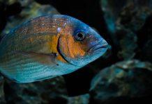 aquacultura e CoLAB e B2E