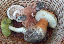 mundo dos cogumelos Serra da Estrela