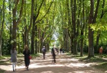 Serralves On Line Experience