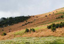Proprietários portugueses dinheiro para limpar terrenos