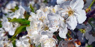 Cova da Beira neve em forma de flor