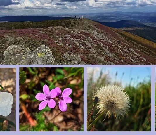 primavera na Serra da Estrela