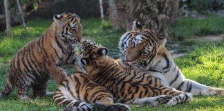 Jardim Zoológico no Dia da Mãe