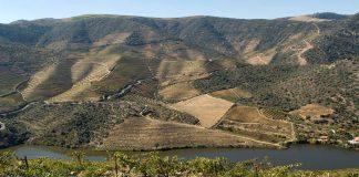 IVDP sustentabilidade no Douro