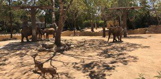 Savana MEO no Jardim Zoológico