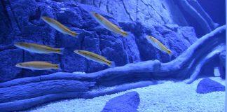 novo aquário do Fluviário de Mora