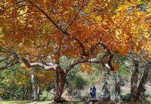 Outono na Serra da Estrela